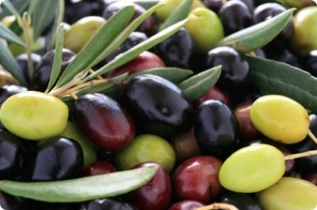 La maturazione mista delle sfumature di colore delle drupe coincide con il miglior momento per la raccolta.